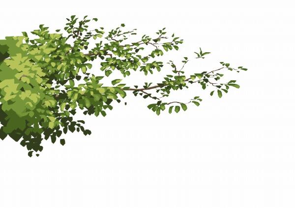 枝 描き方 葉